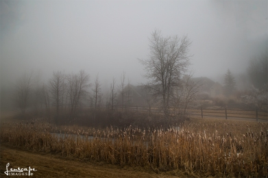 Bears Den in the mist - 1I8A3413