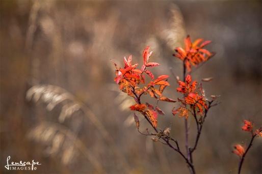 orange leaves-1I8A3498-2